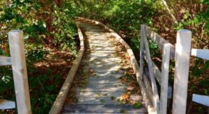 6 Totally Kid-Friendly Hikes In Rhode Island That Are 1 Mile And Under