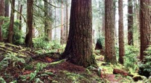 The Ancient Forest In Oregon That's Right Out Of A Storybook