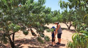 A Day Trip To This Peach Orchard Near Austin Is All You Need For Summer