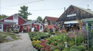 These 5 New Hampshire Farms Have So Much More Than Produce