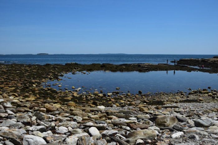 7 Tremendous Tidal Pools Hiding In Maine You Ll Want To