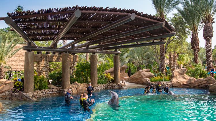 Swim With Dolphins At Seaworld San Antonio In Texas