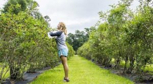 The Whole Family Will Enjoy A Visit To This U-Pick Farm In Louisiana