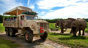 Most People Don't Know You Can Stay Overnight At This Extraordinary Safari Park In New Jersey