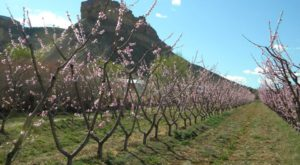 If You Only Visit One Colorado Orchard This Year Make It This One