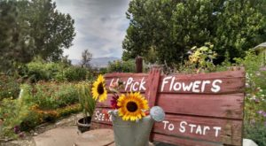 If There's Any Time To Visit This One-Of-A-Kind Colorado Flower Farm, This Summer Is It