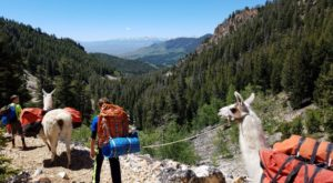 Go Llama Hiking Through The Wilderness On This Unforgettable Idaho Adventure