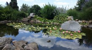 The Serene Hummingbird Garden Near Cleveland That's Too Beautiful For Words