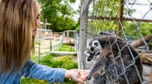 Most People Don't Know This Missouri Zoo And Adventure Park Even Exists