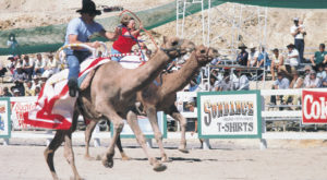 Nevada's Camel Races May Just Be The Most Extraordinary Thing You've Ever Seen