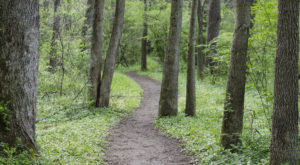 Hike The Woodsy Trail In Delaware That Offers Shade From The Summer Sun