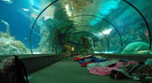 Most People Don't Know You Can Stay Overnight At This Extraordinary Zoo In Nebraska