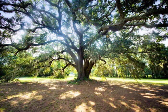 Plantation Tours Charleston Sc That Pick You Up