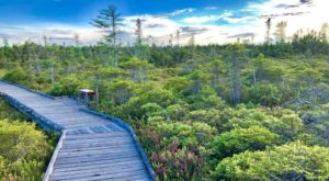 This Maine Park Has Endless Boardwalks And You'll Want To Explore Them All