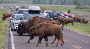 Here Are The 12 Biggest Risks Living In The State of Wyoming