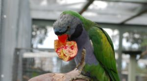 Most People Don't Know About This Parrot Sanctuary Hiding In Hawaii
