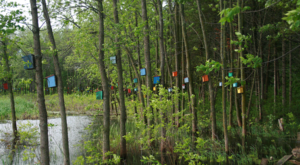 This Mysterious Birdhouse Forest Hiding In Vermont Is Like Something From A Dream