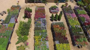 The Massive Mississippi Garden That's Like Something From A Dream