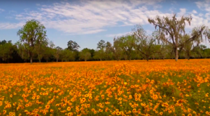 Get Lost In A Field Of Color At This Enchanting Wildflower Meadow In Florida