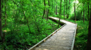 This South Carolina Park Has Endless Boardwalks And You'll Want To Explore Them All