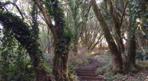 This Stunning Staircase Hike Through The Woods In Northern California Is Worth Every Step