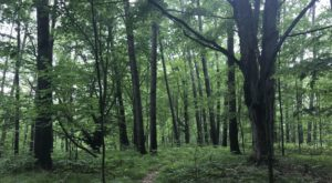 The Secret Garden Hike In Michigan Will Make You Feel Like You're In A Fairytale