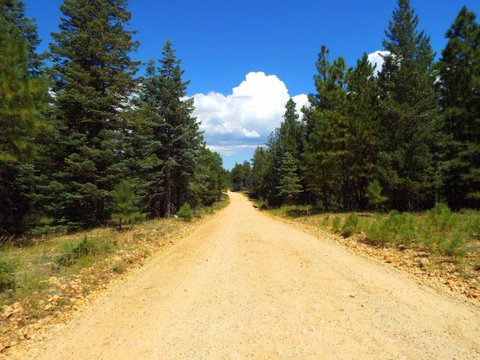 Mogollon Rim Is The Greenest Spot In Arizona And Will