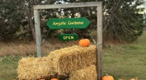 You'll Have Loads Of Fun At This Pick-Your-Own Produce Farm In North Dakota