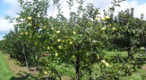 If You Only Visit One Alabama Orchard This Year Make It This One