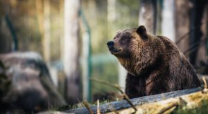 The One Place In Alaska Where You're More Likely To Spot A Bear Than Almost Anywhere In The U.S.