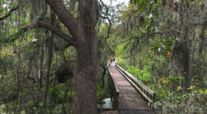 The Wetlands Trail In South Carolina That's Like A Walk Through Middle Earth