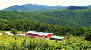 If You Only Visit One North Carolina Orchard This Year Make It This One