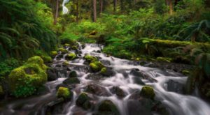 This Enchanting Valley Is Officially The Quietest Place In America