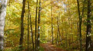 The Awesome Hike That Will Take You To The Most Spectacular Fall Foliage In Michigan