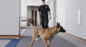 You May Soon See More Security Dogs Than Ever When You Travel