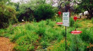 The Serene Hummingbird Garden In Arizona That's Too Beautiful For Words