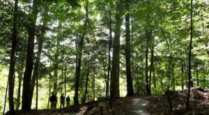 The Ancient Forest Near Cleveland That's Right Out Of A Storybook
