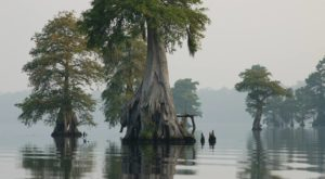 6 Louisiana Swamps So Beautiful You Have To See Them To Believe