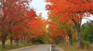 You'll Be Happy To Hear That Michigan's Fall Foliage Is Expected To Be Bright And Bold This Year