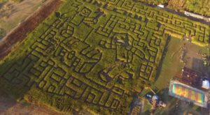 Get Lost In This Awesome 8-Acre Corn Maze In Virginia This Autumn