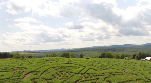 Get Lost In This Awesome 24-Acre Corn Maze In Vermont This Autumn