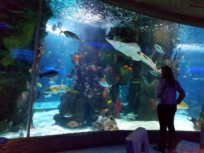 The Aquarium Restaurant Is The Most Unusual Restaurant In ...