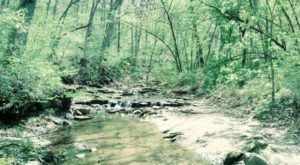 9 Totally Kid-Friendly Hikes In Iowa That Are 1 Mile And Under