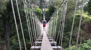 7 Amazing Treetop Adventures You Can Only Have In Hawaii