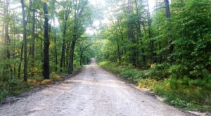 This Drive Through An Arkansas Forest Will Be The Most Scenic Trip You Take This Year