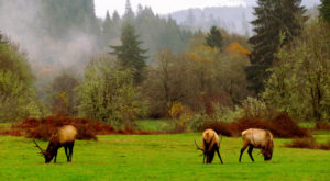 Most People Don't Know About This Incredible Wildlife Refuge Hidden On Oregon's Coast