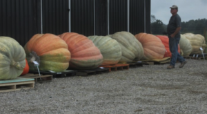 You Have To See The World's Largest Pumpkins At This Small Town Festival In Kentucky