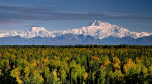 The Treetop Adventure In Alaska You'll Absolutely Love