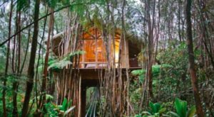 This Hawaiian Treehouse Is One Of The Most Wished For Airbnbs In The Whole Wide World