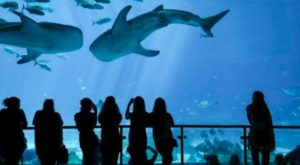 The 10 Million Gallon Aquarium In The U.S. That You Simply Must Visit